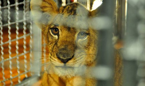 WTTC Release Key Guidelines for Prevention of Illegal Wildlife Trade